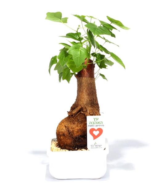 עץ האהבה