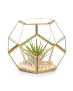 טרריום זכוכית מחומש